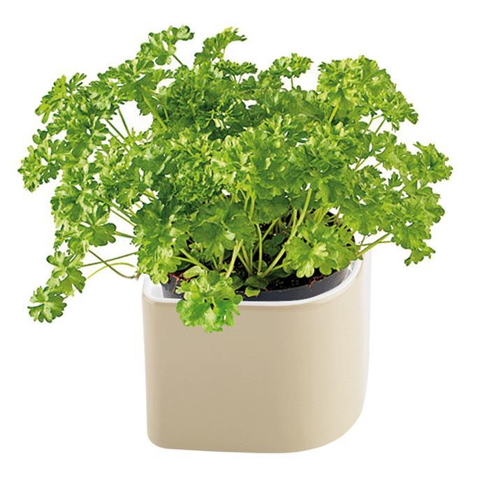 DECORATIVE HERB POT