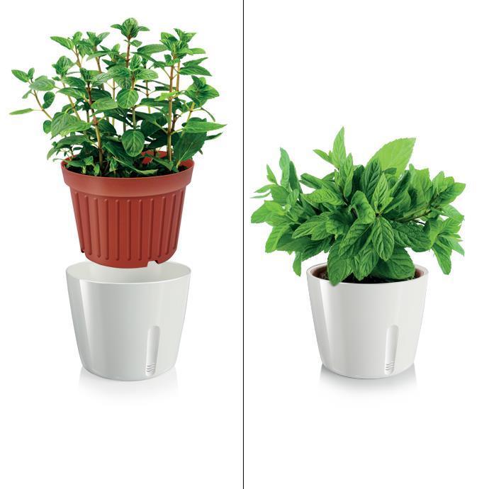 PLANT POT, ROUND, WHITE